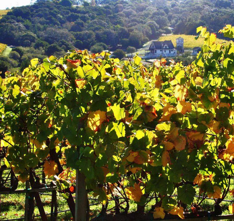 sonoma-cutrer, vineyard, owsley